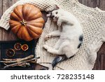 Stock photo cute kitten relaxing on warm sweater by autumn rustic home decor lazy cat resting on soft pullover 728235148