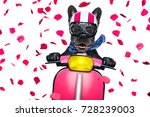 in love for valentines   french ... | Shutterstock . vector #728239003