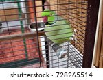 beautiful green parrot in a cage | Shutterstock . vector #728265514