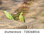 two green parrots in open... | Shutterstock . vector #728268016