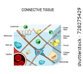 Connective Tissue. ...