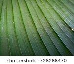 cigar flower plant  scientific... | Shutterstock . vector #728288470
