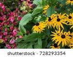 Bright Yellow Flowers Of...
