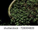 green leaves in old sphere pots ... | Shutterstock . vector #728304820
