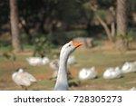 white goose head | Shutterstock . vector #728305273