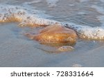 Small photo of Jellyfish known as amphibals are animals belonging to the cnidaria filum, included in the skifozoa biological class stranded on the coast of Cherating, Pahang, Malaysia.