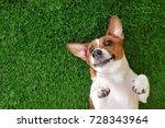 Crazy Smiling Dog Jack Russel...