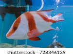 colorful fish in fish tank | Shutterstock . vector #728346139