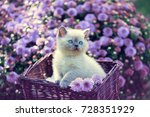 Stock photo cute little kitten in a basket in a garden near violet daisy flowers 728351929