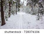 Walk In Winter Woods. Snow...