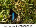 Butterfly   Borboleta Morpho...