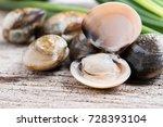 fresh enamel venus shell ... | Shutterstock . vector #728393104