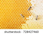 Sealed Honeycombs. Bees Crawl...