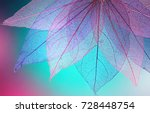 macro leaves background texture ... | Shutterstock . vector #728448754