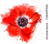 Luxurious Red Poppy Closeup. A...