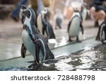 penguin at the zoo  | Shutterstock . vector #728488798