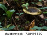 forest. mushrooms in the forest.... | Shutterstock . vector #728495530