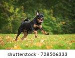 happy rottweiler dog running in ... | Shutterstock . vector #728506333