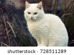 Stock photo white cat standing outside white cat posing for picture outdoors 728511289