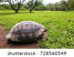 Stock photo galapagos giant tortoise geochelone elephantopus 728560549
