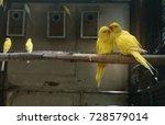 Yellow birds talk. lover bird...