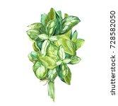 botanical drawing of a basil... | Shutterstock . vector #728582050