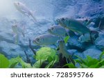 many small fishes in aquarium.... | Shutterstock . vector #728595766