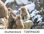 group of baby monkeys  | Shutterstock . vector #728596630
