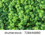 green leaf background. | Shutterstock . vector #728646880