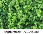 green leaf background. | Shutterstock . vector #728646880
