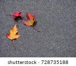fallen autumn tree leaves on...   Shutterstock . vector #728735188