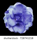 Blue Rose Flower  On The Black...
