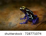 poison frog  blue frog in... | Shutterstock . vector #728771074