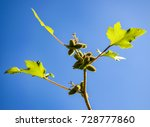 Prickly Weed Plant Against The...