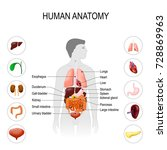 human anatomy. medical poster... | Shutterstock .eps vector #728869963