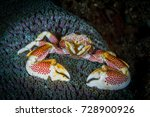 Porcelain Crab On The Top Of...