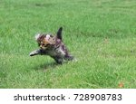 Stock photo kitten playing in field 728908783