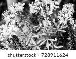 september 2017  belgium | Shutterstock . vector #728911624