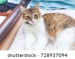cat gray white lined bed | Shutterstock . vector #728937094
