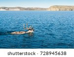 the reindeer swims the sea from ... | Shutterstock . vector #728945638