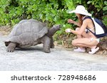 Stock photo young woman feeding the turtle 728948686