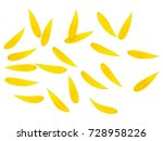 Small Yellow To Orange Petals...