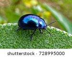 Blue Beetle Walking On...