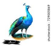 Peacock Digital Art...