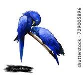 Hyacinth Macaw Digital Art...