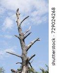 Small photo of dead tree skeleton