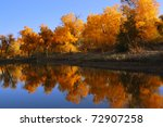Diversifolia populus trees near the lake in North China - stock photo