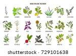 best herbs for acne treatment.... | Shutterstock .eps vector #729101638
