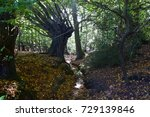 valley of the damned   epping... | Shutterstock . vector #729139846