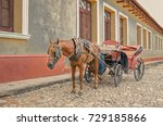 Horse In Harness On Trinidad...